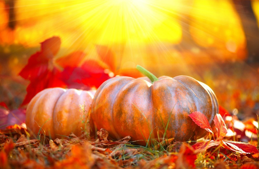 Fall Festivals and Autumn Activities Around Harbor Club on Lake Oconee